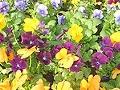 花と緑の『丸幸農園』。御殿場の花・園芸の事ならおまかせ!!